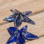 Søstjerner blå